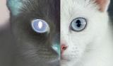 Schrödingers Katzes Avatar